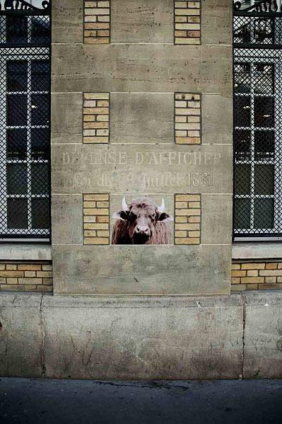 rue Lamartine, 75009, le Buffle, octobre 2010  http://animaux.dans.les.rues.de.paris.over-blog.com
