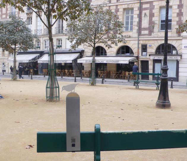 Chasse au trésor : trouvez ces sitelles (et les autres) cachées dans Paris !