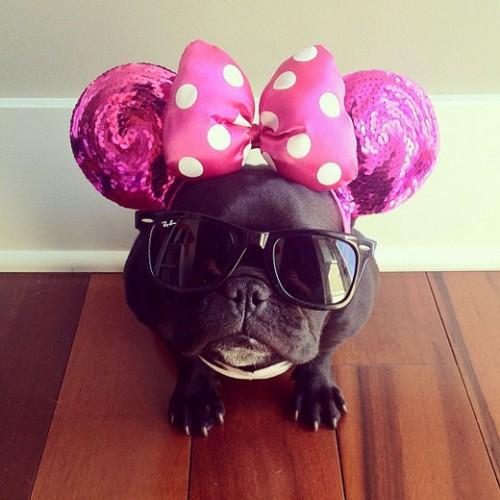 Minnie la chienne