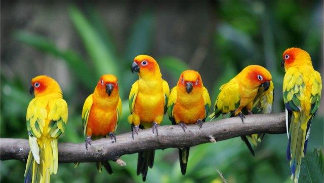 oiseaux-famille